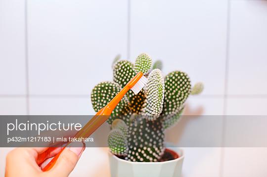Kaktus wird geputzt - p432m1217183 von mia takahara