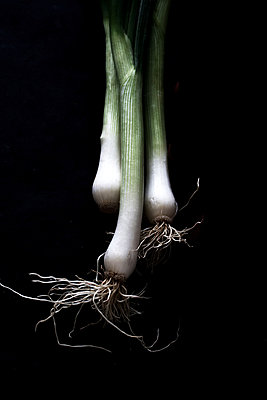 Spring onions - p450m1119355 by Hanka Steidle