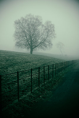 Foggy morning in the farm  - p794m1015198 by Mohamad Itani