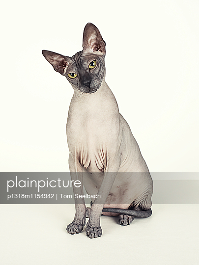 Nude Cat - p1318m1154942 von Tom Seelbach