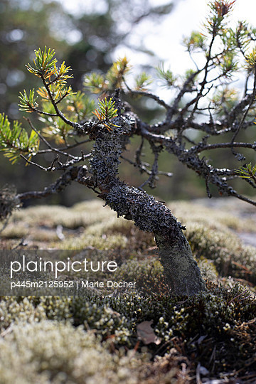 small tree - p445m2125952 by Marie Docher