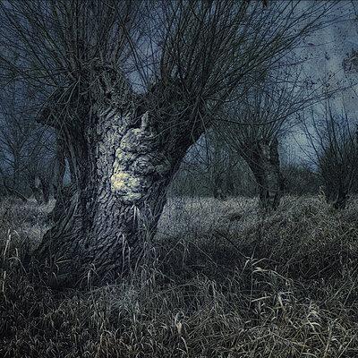 Fear No Ghosts - p1633m2210056 by Bernd Webler