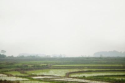 China, guangxi province, yangshuo, rice fields - p9244879f by Image Source