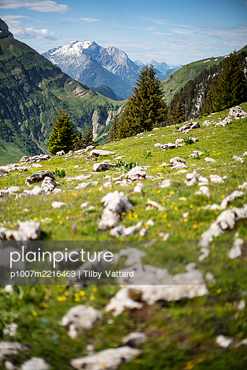 Mountain range seen from Alpine meadow, France - p1007m2216469 by Tilby Vattard
