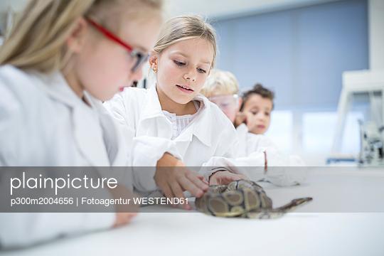 Pupils in science class examining snake - p300m2004656 von Fotoagentur WESTEND61