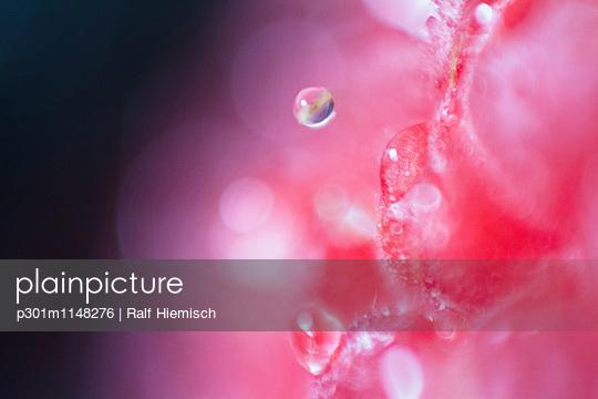 p301m1148276 von Ralf Hiemisch