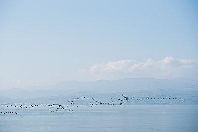 Vogelzug am See Genezareth - p1046m1138224 von Moritz Küstner