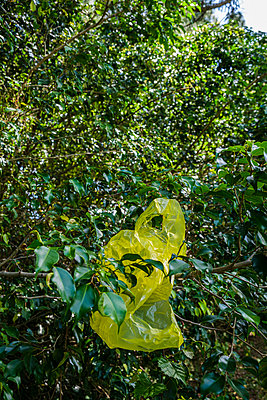 Yellow plastic bag in tree - p1427m2186365 by Tetra Images
