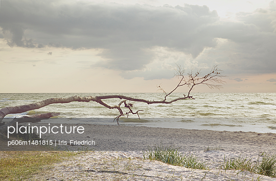 Wilder Weststrand - p606m1481815 von Iris Friedrich