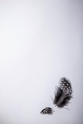 Fallende Federn - p1156m2122558 von miep