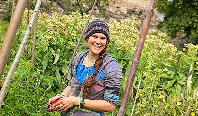 Austria, Schiltern, Alternative gardener at tobacco plant - p300m2213702 by Dieter Schewig