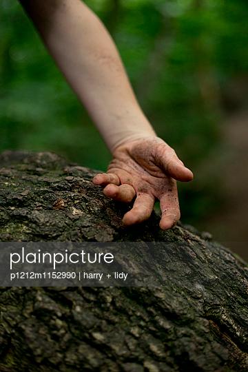 Junge hebt Ast im Wald - p1212m1152990 von harry + lidy