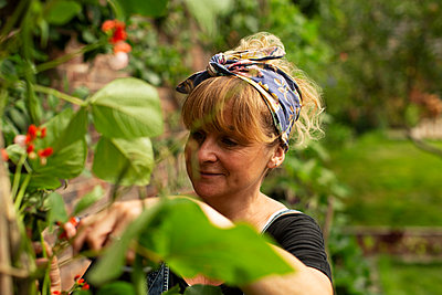 Woman tending to plants in garden - p1023m2262025 by Martin Barraud