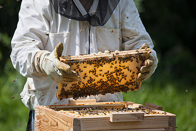 Midsection of beekeeper holding honeycomb at farm - p301m1070124f by Halfdark