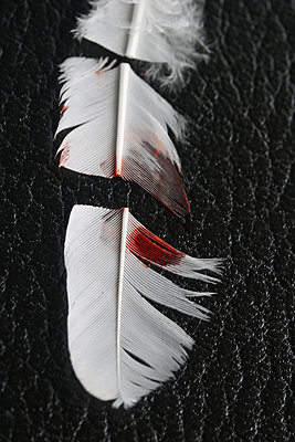 Slashed white feather - p450m1527707 by Hanka Steidle