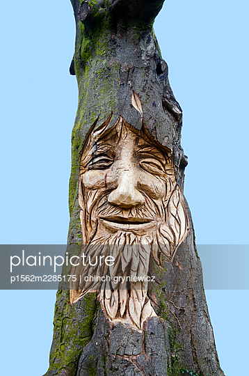 Carved bearded face on an old tree - p1562m2285175 by chinch gryniewicz