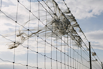 A shredded plastic bag caught on barbed wire fence - p1100m876516f by Paul Edmondson