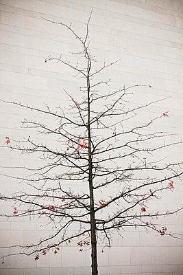 Kahler Baum - p7950112 von JanJasperKlein