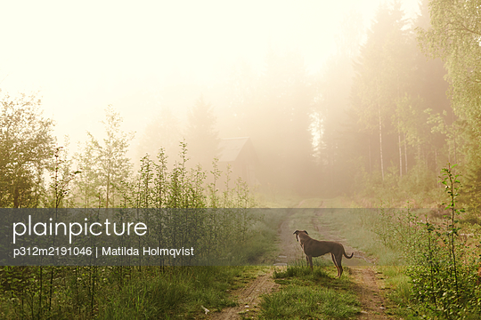 Dog standing on dirt road - p312m2191046 by Matilda Holmqvist