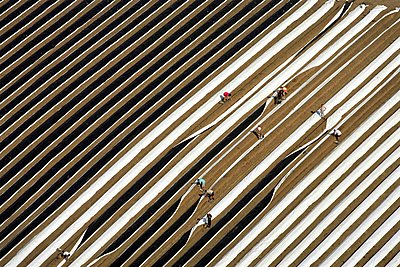 Asparagus harvest - p1016m1590786 by Jochen Knobloch
