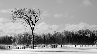 Black and white winter landscape with snowy field, fence and forest; Sault St. Marie, Michigan, United States of America - p442m2155088 by Susan Dykstra
