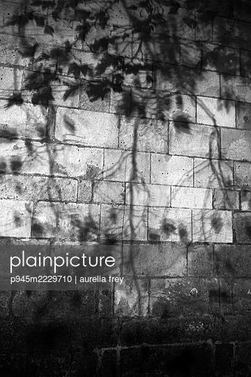 Silhouette von Ästen und Blättern an einer Mauer - p945m2229710 von aurelia frey