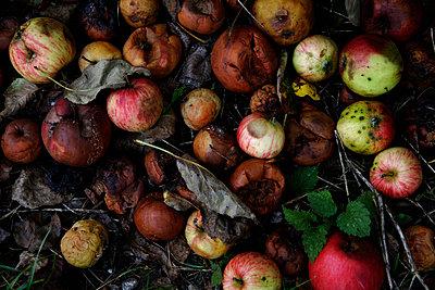 Faule Äpfel - p8670251 von Thomas Degen