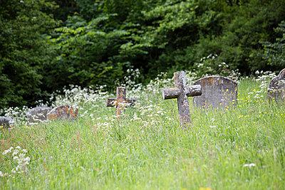 Old graveyard - p1057m1440303 by Stephen Shepherd