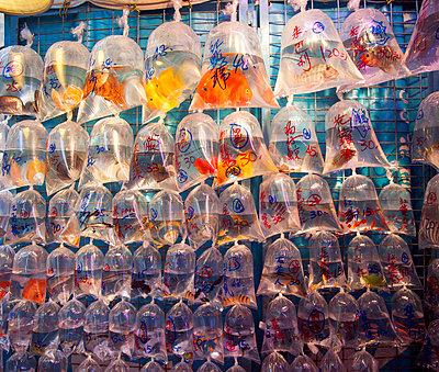 Verkauf von Zierfischen in Beuteln, Hongkong - p1542m2142293 von Roger Grasas