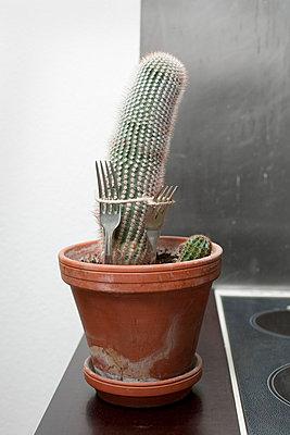 Befestigter Kaktus - p2500480 von Christian Diehl