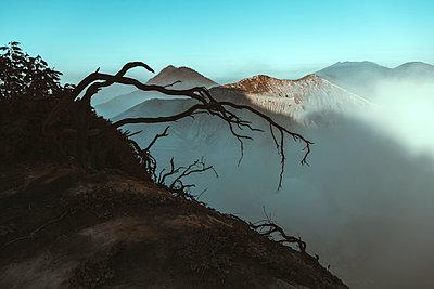 Indonesia, Java, Ijenvolcano, close up of barren tree - p300m2143909 by Konstantin Trubavin