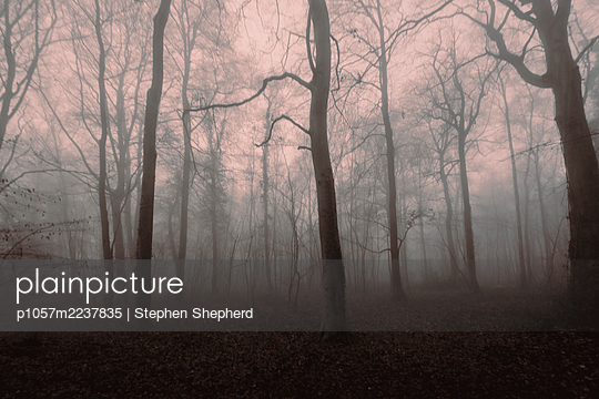 Great Britain, Trees in the fog - p1057m2237835 by Stephen Shepherd