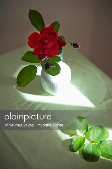 Rose - p1149m2021262 von Yvonne Röder