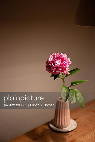 Beautiful common peony  - p454m2200602 by Lubitz + Dorner