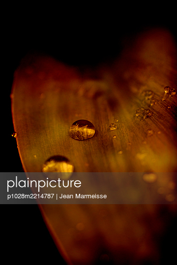 Rain drops on leaf - p1028m2214787 by Jean Marmeisse