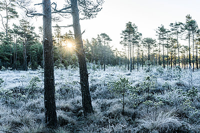 Winter forest - p312m1533358 by Mikael Svensson
