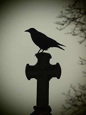 Raven on grave - p132m2071279 by Peer Hanslik
