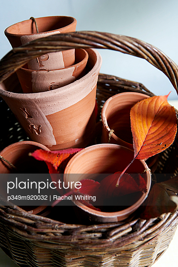 terracotta flower pots and Autumn leaves in basket;  Isle of Wight;  UK - p349m920032 by Rachel Whiting