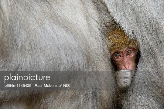 p884m1145438 von Paul Mckenzie/ NIS
