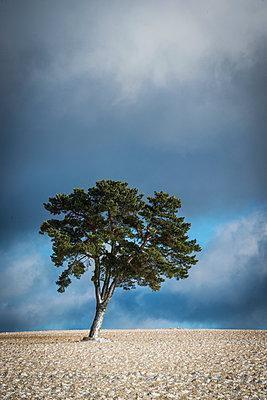 Baum im Winter - p829m949349 von Régis Domergue