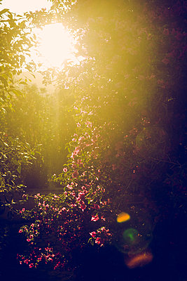 Abendsonne - p904m1044991 von Stefanie Päffgen