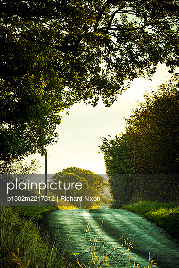 A rural road  with trees on both sides and overhead - p1302m2217312 by Richard Nixon