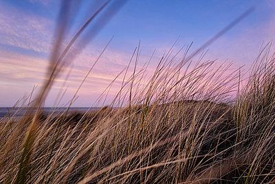 Dune scenery at sunset - p1203m1578230 by Bernd Schumacher