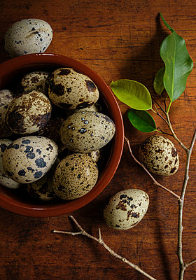 Bird eggs in bowl by branch - p1427m2186376 by Tetra Images