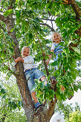 Brother and sister climbing a tree - p1540m2200509 by Marie Tercafs