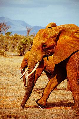 Tsavo East National Park - p1002m833704 by christian plochacki