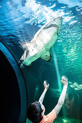 Junge in einem Ozeanium - p1082m2071314 von Daniel Allan