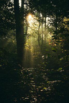 Sonnenstrahlen erhellen den Wald - p1696m2296585 von Alexander Schönberg