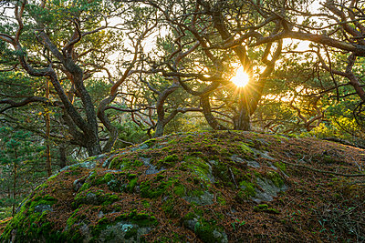 View of forest - p312m1570576 by Mikael Svensson