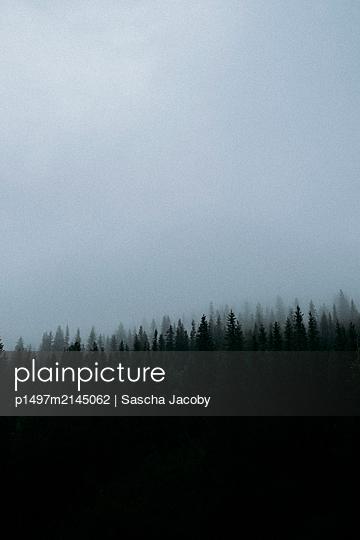 Dunkler Wald in Norwegen im mystischen Nebel bei Regen - p1497m2145062 von Sascha Jacoby